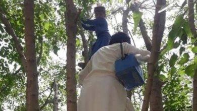 Photo of بچے کو پولیو کے قطرے پلانے کے لیے کارکن درخت پر چڑھ گیا